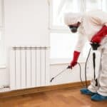 Tips To Get Rid Of Insects At Home