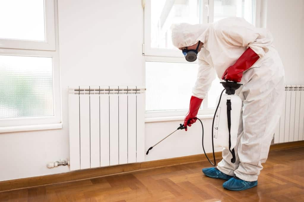 Read more about the article Tips To Get Rid Of Insects At Home