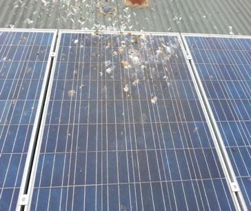 bird poo on solar panels
