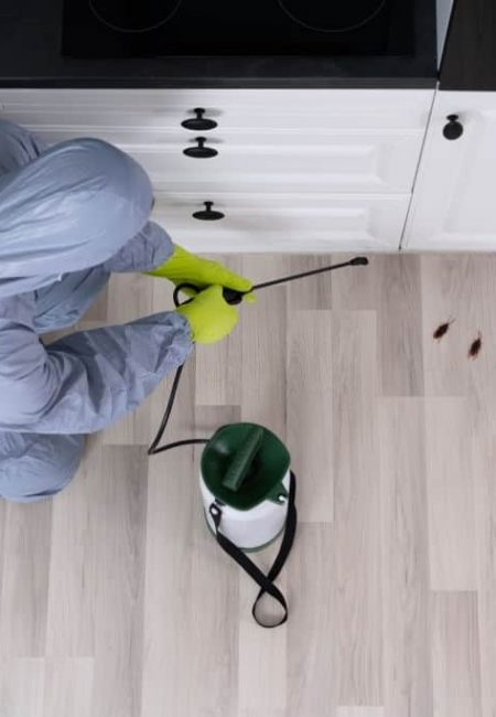 Pest exterminator laying traps in an office